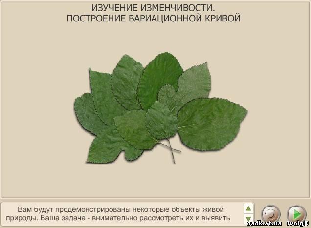 Вариационная кривая изменчивости длины листьев
