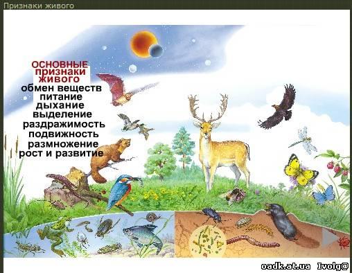 биология картинки: