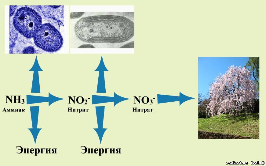 archaea chemosynthesis